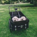 Dog cargo bike - Classic