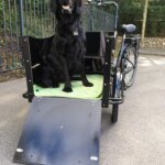 Electric cargo bike for dog