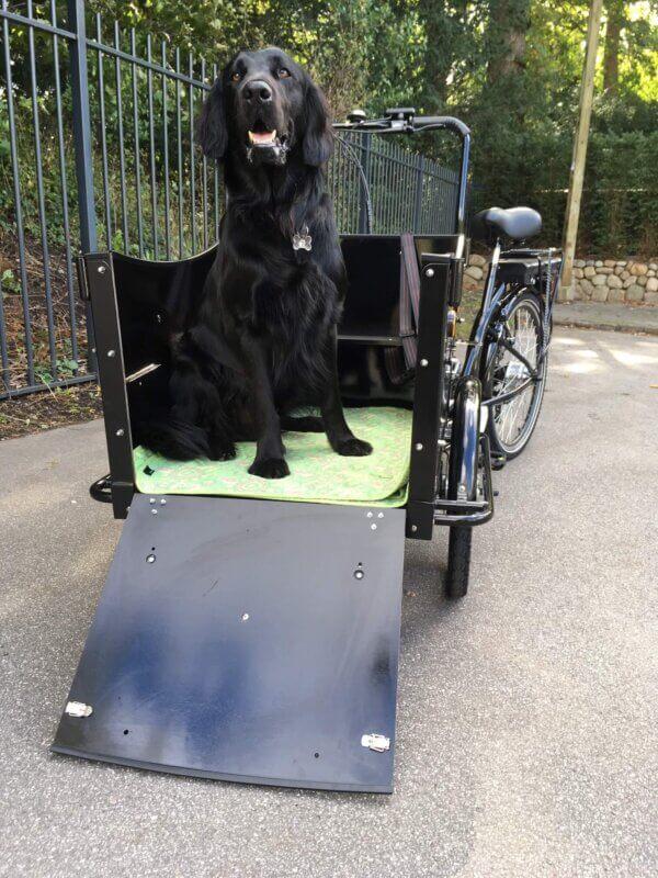 Electric cargo bike for dog